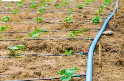 Drip-Irrigation-1-500x500 (1)